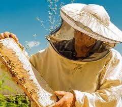 Программа Пчеловод